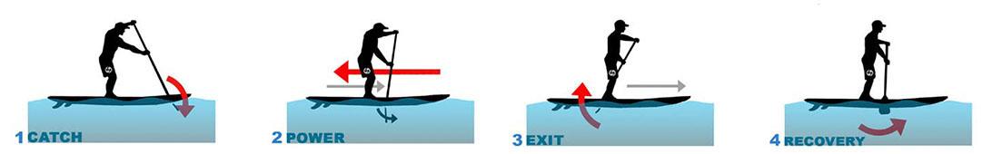 Paddleboard Stroke phases